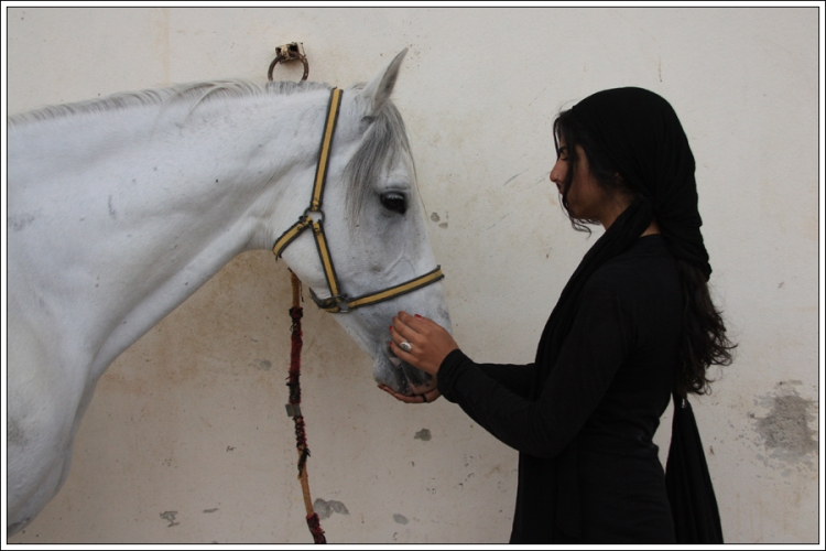 Badr, a racing stallion. Damascus, spring 2010.